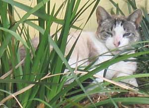 cat behind grass